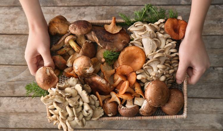 mangiare i funghi ti fa perdere peso